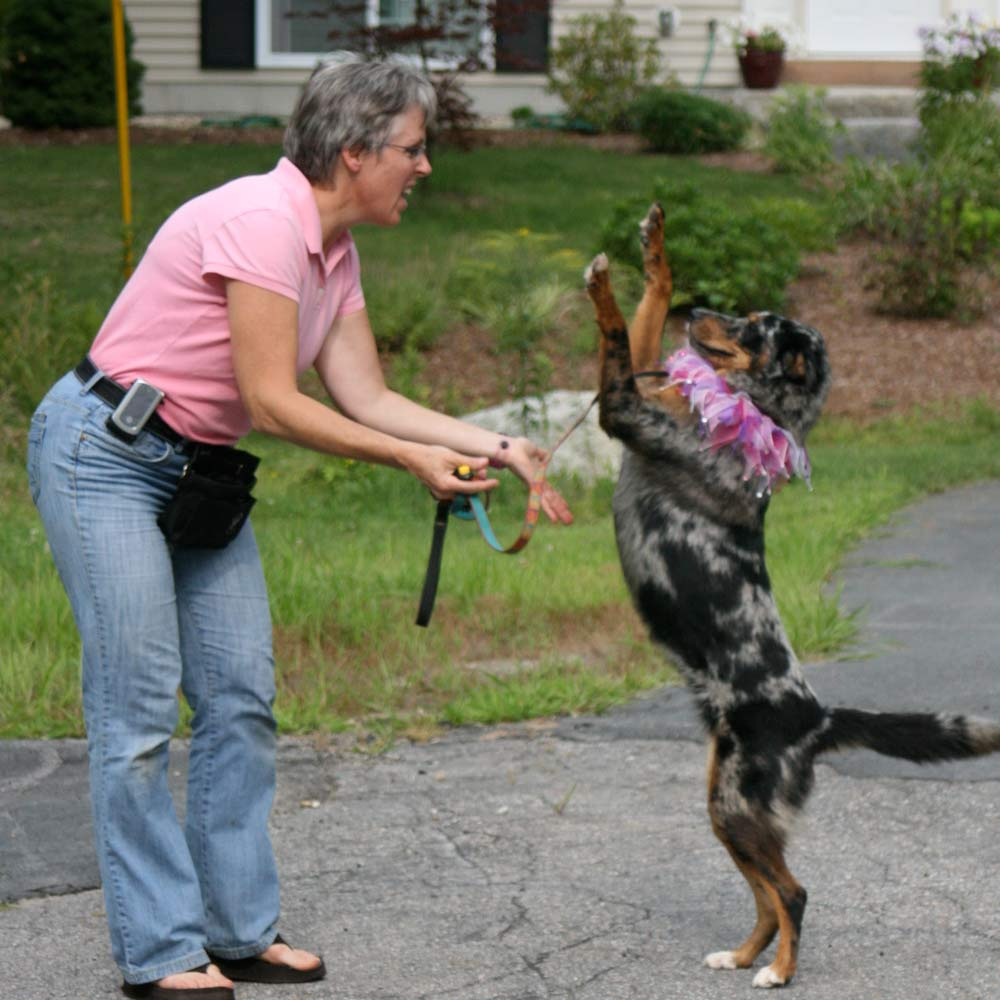 Denise training a dog