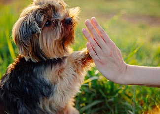 Dog doing high five