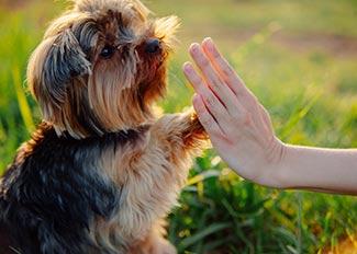 Dog doing high five